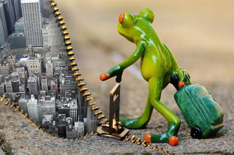 frosch reisen